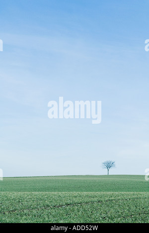 Tree in middle of green fields - Stock Photo