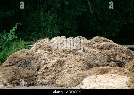 Horse manure in stable yard - Stock Photo