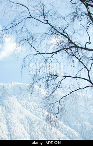 Bare tree, snow-covered mountain in background - Stock Photo