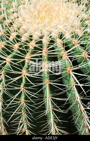 Cactus, extreme close-up