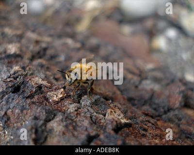 Bee on wood at the beach - Stock Photo