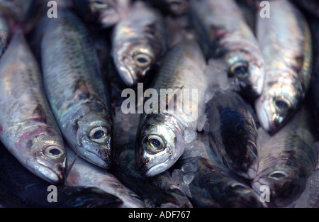 fresh young sardines for sale in fish market - Stock Photo