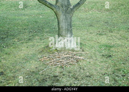 Pile of twigs and branches at base of tree, high angle view - Stock Photo
