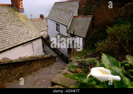A street in Clovelly looking down the steep ancient stone steps with quirky old buildings and a white lily in the - Stock Photo