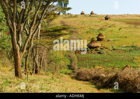 Acacia fence built to protect crops from wild animals Mount Elgon Kenya - Stock Photo