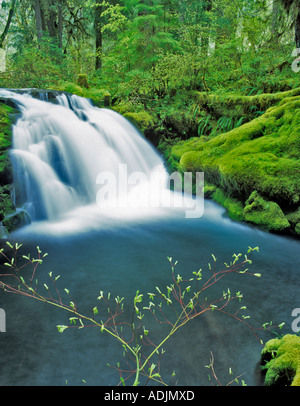Spring growth and unnamed falls on White Branch of Lost Creek Three Sisters Wilderness Oregon - Stock Photo