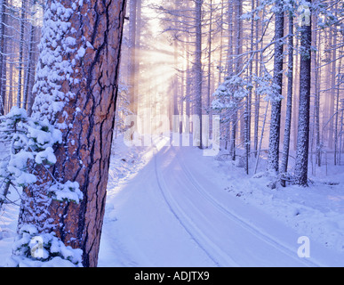 Road in Deschutes National Forest with snow and sunburst Oregon - Stock Photo