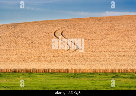 Tractor lines in wheat field The Palouse Washington - Stock Photo