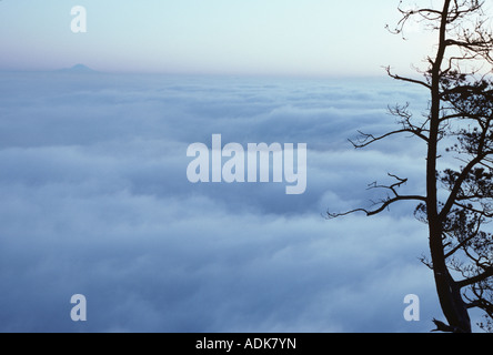 Mount Rainier at sunset above the clouds from Mount Erie Fidalgo Island Washington State USA - Stock Photo