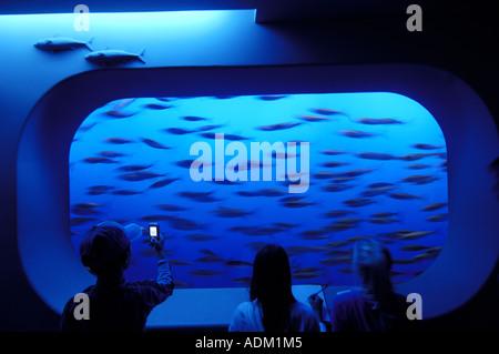 Fish Tank at Monterey Aquarium in Monterey on California's Central Coast - Stock Photo