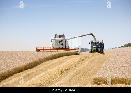 Combine harvester and tractor in a field harvesting wheat on a bright English summers day. Wiltshire, UK - Stock Photo