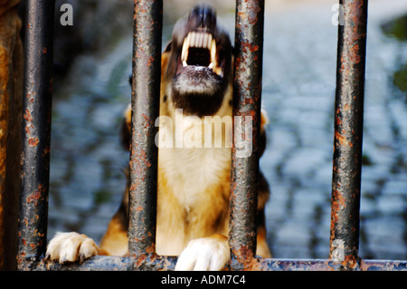 Dogs, Guard dog - Stock Photo