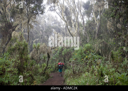 Africa Tanzania Kilimanjaro National Park MR Hiker descends trail through rainforest below Mweka Camp - Stock Photo