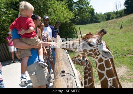 Battle Creek Michigan Visitors study the giraffes in the Wild Africa exhibit at the Binder Park Zoo - Stock Photo