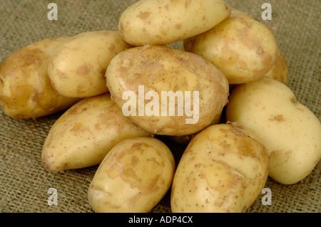 Jersey Royal potatoes ex supermarket shop bought tubers - Stock Photo