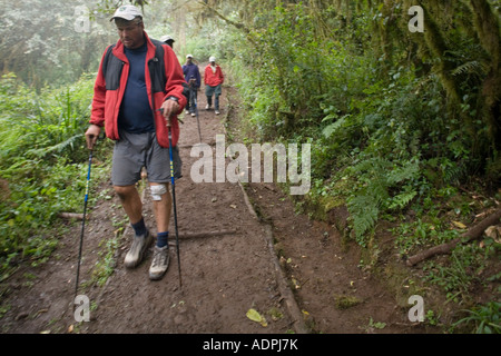 Africa Tanzania Kilimanjaro National Park MR Hiker with knee injury slowly descends trail through rainforest below - Stock Photo
