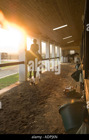 Early morning activity in Thoroughbred horse training barn - Stock Photo