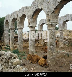 Cattle in ruins of Romano Byzantine Christian church near Aleppo Syria - Stock Photo