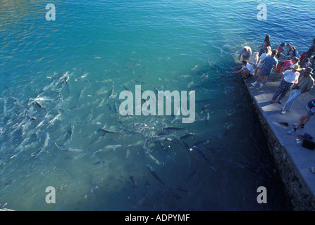 Australia Northern Territory Tourists feed fish at high tide at Doctors Gully in Darwin - Stock Photo