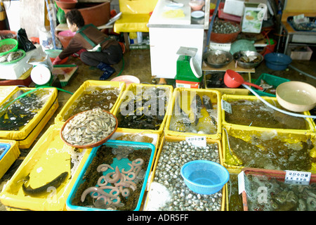 Live seafood market near Yeongjongdo pier Incheon Gyeonggi Do South Korea - Stock Photo