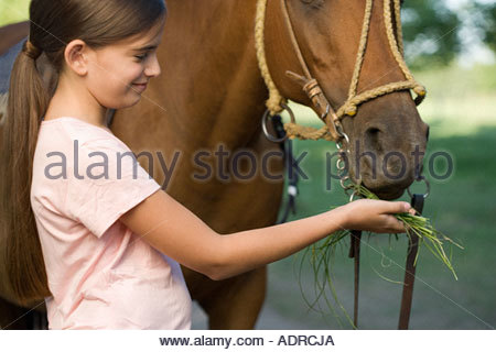 Girl feeding grass to a horse - Stock Photo