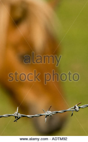 Horse in soft focus behind a barbed wire fence - Stock Photo