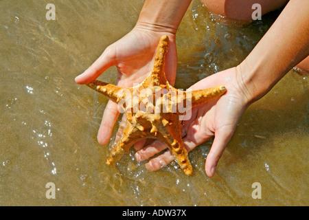 Starfish on hands - Stock Photo