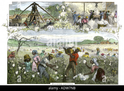 African American slaves picking baling and ginning cotton by steam on a plantation in the US South, 1800s. Hand-colored woodcut Stock Photo