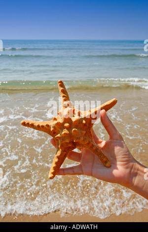Starfish on hand - Stock Photo