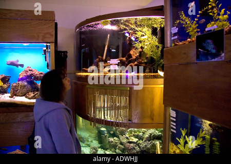 A woman looking at fish in a pet shop tank pets at home for Fish stores in utah