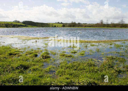 Flooded watermeadows in flood plain near Burford Oxfordshire The Cotwolds England United Kingdom - Stock Photo
