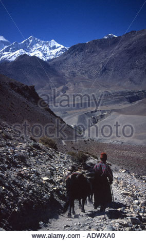 Local trader near Kagbeni on the Annapurna Circuit, Nepal - Stock Photo
