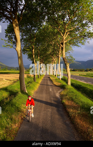 Cyclist avenue of trees Val du Fenouillet Languedoc France - Stock Photo