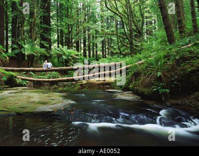 Couple sitting on log over stream amid giant Sequoia trees in Otway Ranges of Victoria,  Australia - Stock Photo