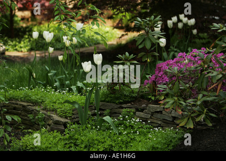 Sweet woodruff Stock Photo: 88639904 - Alamy