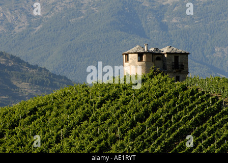 Vineyards and building with late afternoon light, Valle d'Aosta, Italy - Stock Photo