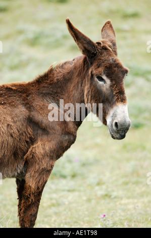 Donkey. - Stock Photo