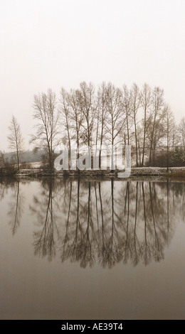 Poplar trees on a lake's bank in early spring. Altai. Siberia. Russia - Stock Photo