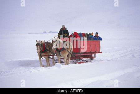 A horse drawn sleigh carries visitors through the snowy landscape of the National Elk Refuge near Jackson in Grand - Stock Photo