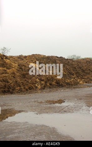 Large pile of manure on a UK pig farm. A muck heap. - Stock Photo