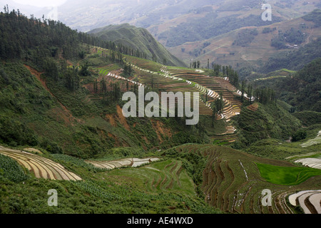 Steep rice terraces in the Muong Hoa Stream Valley near Sapa Vietnam - Stock Photo