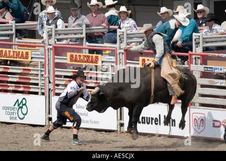 Bull Rider At American Rodeo Ca 1950 Bsloc 2014 17