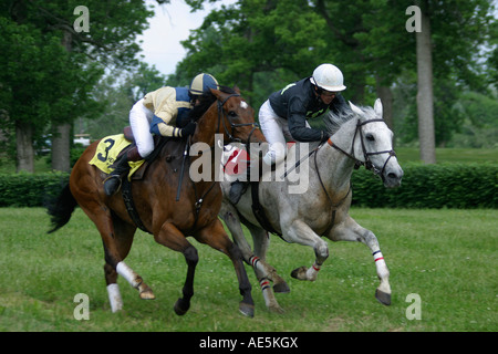 Brown and gray horses with jockeys racing neck and neck on turf track in steeplechase race Lexington Kentucky - Stock Photo