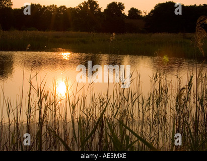 Sunset over Redgrave & Lopham Fen - Stock Photo