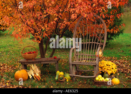 Garden harvest of homegrown produce on bench by maple tree, Missouri USA - Stock Photo