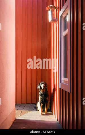 dog sitting outside a modern red house - Stock Photo