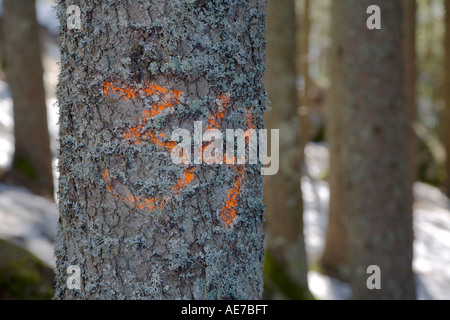 Marking on a tree. - Stock Photo