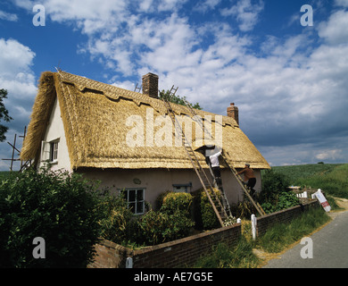 Traditional thatch roof on a refurbished cottage nearing completion village of Lindsey Suffolk - Stock Photo