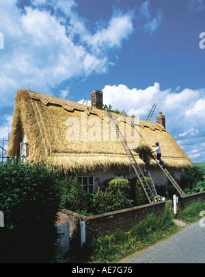 Traditional thatch roof on refurbished cottage nearing completion village of Lindsey Suffolk - Stock Photo