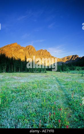 A hiking trail winds through spectacular wildflower meadows below Panorama Ridge Banff National Park Alberta Canada - Stock Photo